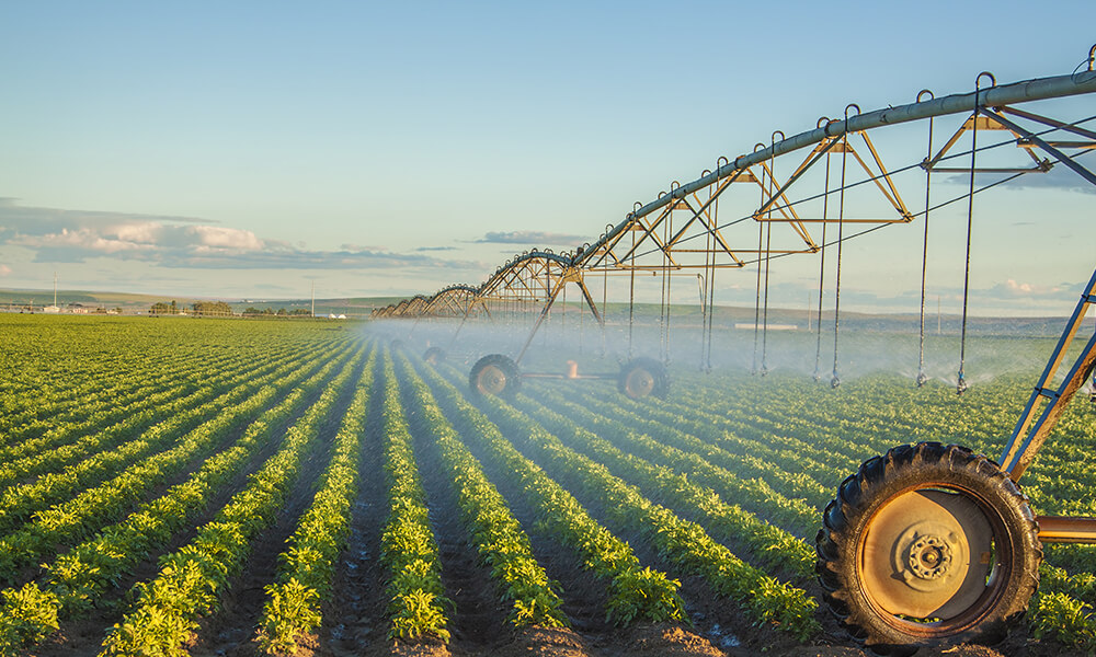 irrigation spraying crops