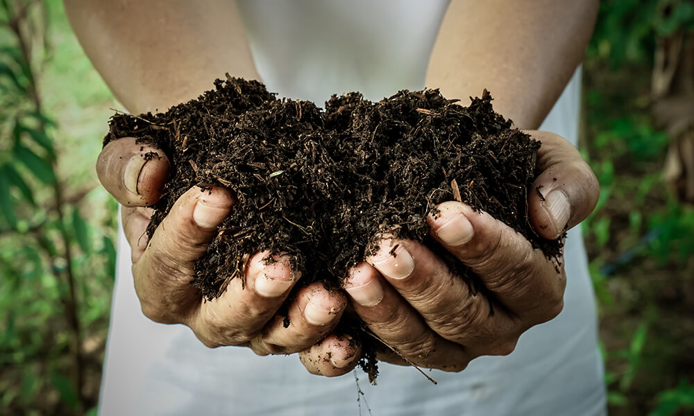 hands holding a pile of brown organic fertilizer